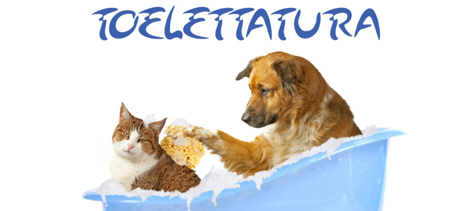 toelettatura : il sagittario pet shop